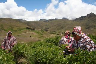 Climate Change Could Increase Poverty In Peru; Indigenous Peoples Respond